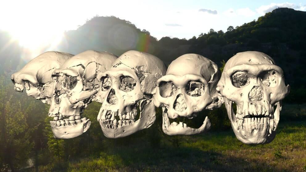 Fem gamla skallar som kan andra historien