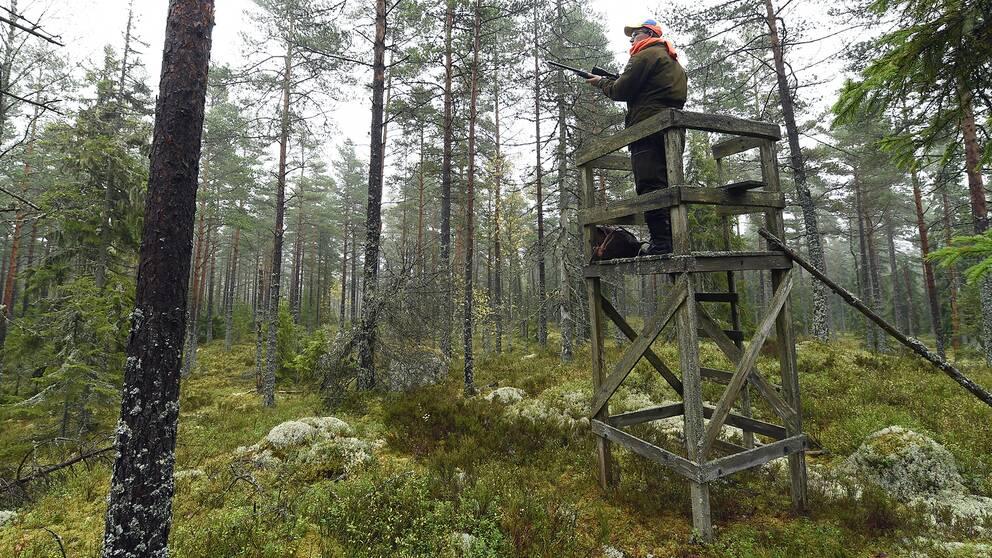 jägare står uppe på ett älgtorn i skogen