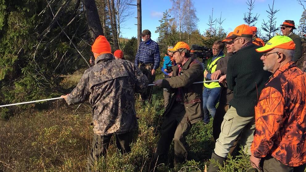 Flera i jaktlaget fick hjälpas åt att dra upp den tunga älgen.