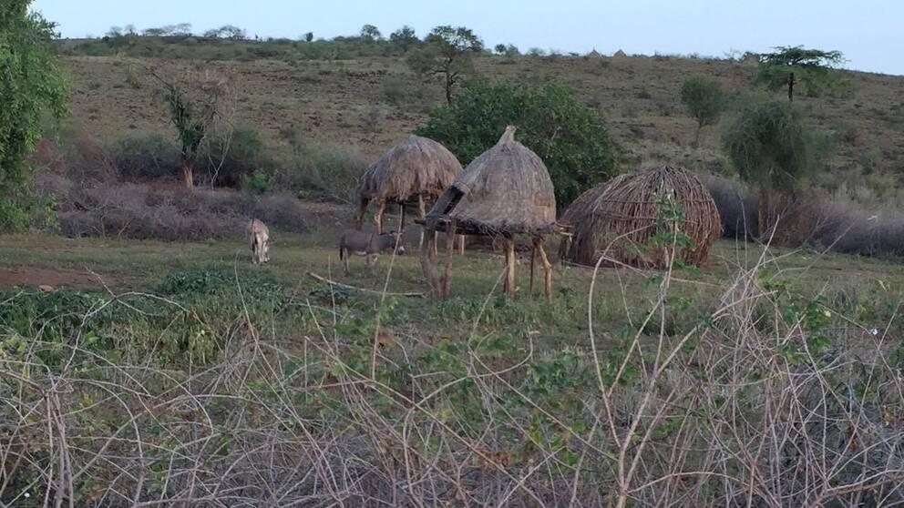 Hyddor i byn Lotimor i sydöstra hörnet av Sydsudan.