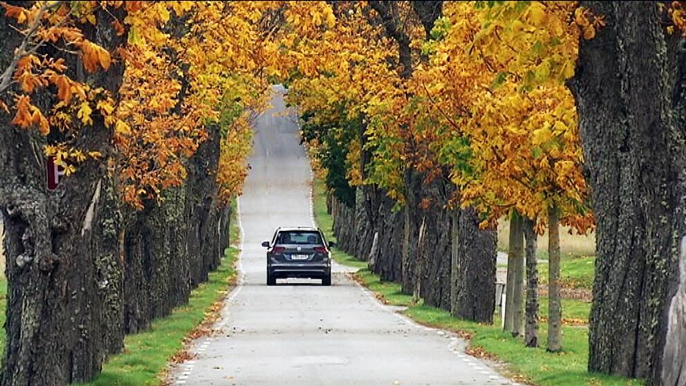 Bil kör på Högantorpsvägen i Salems kommun