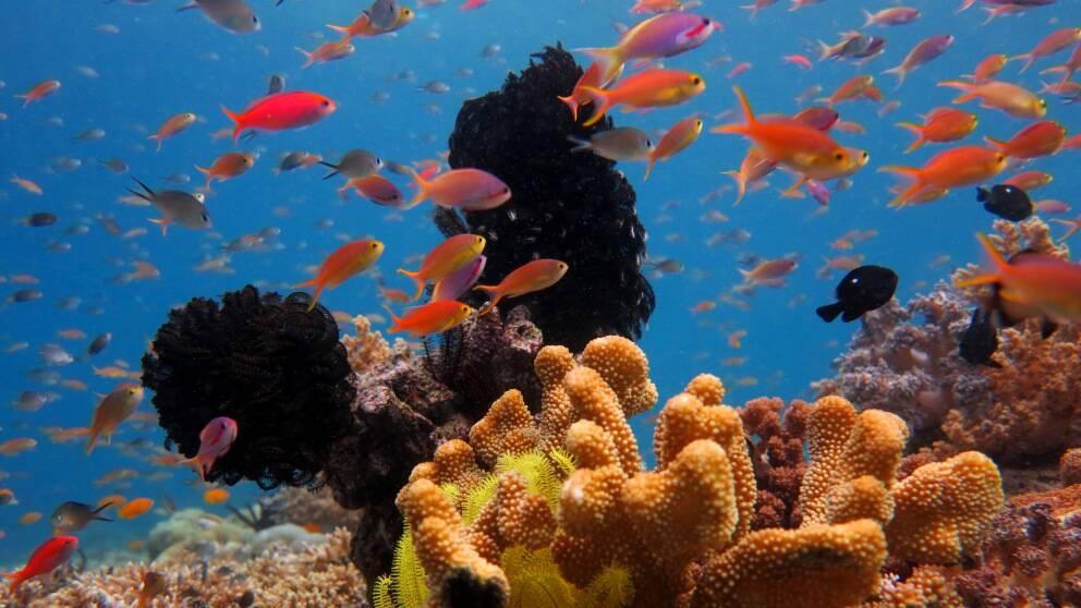 Fiskar blir mer riskbenägna när havet försuras.