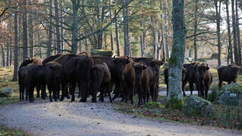 Visenterna på Eriksberg är snart på väg till Ryssland.