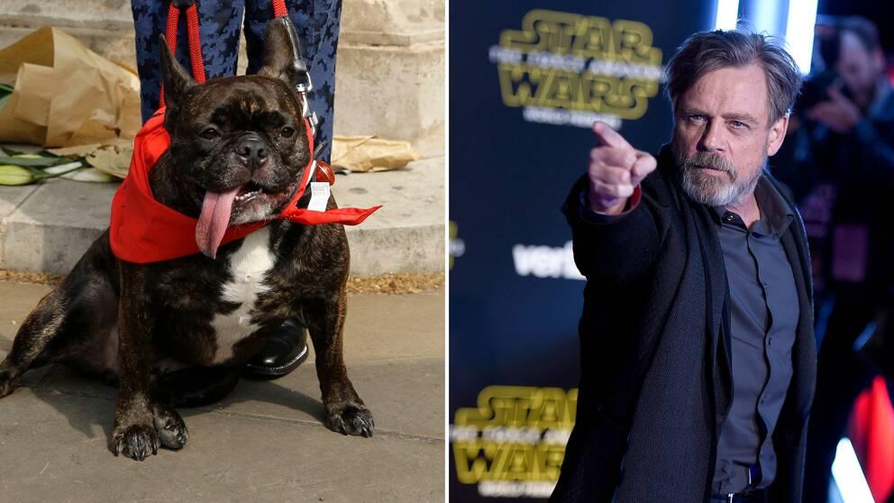 Carrie Fishers hund Gary Fisher och Mark Hamill är med i Star Wars: The Last Jedi båda två.