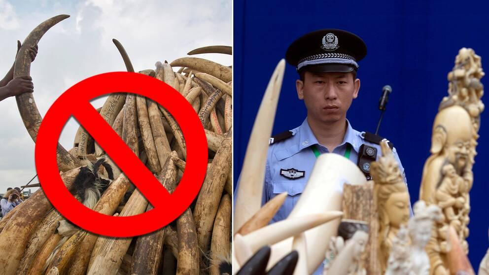 – Det här sänder signalen till kinesiska folket att elefanters liv är viktigare än vår elfenbenskultur.