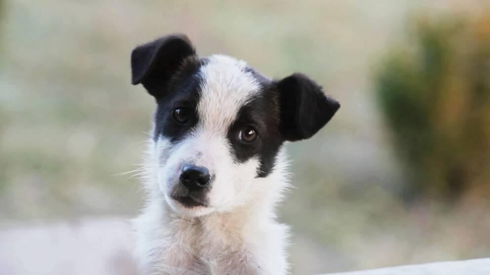 En av alla fantastiska hundar