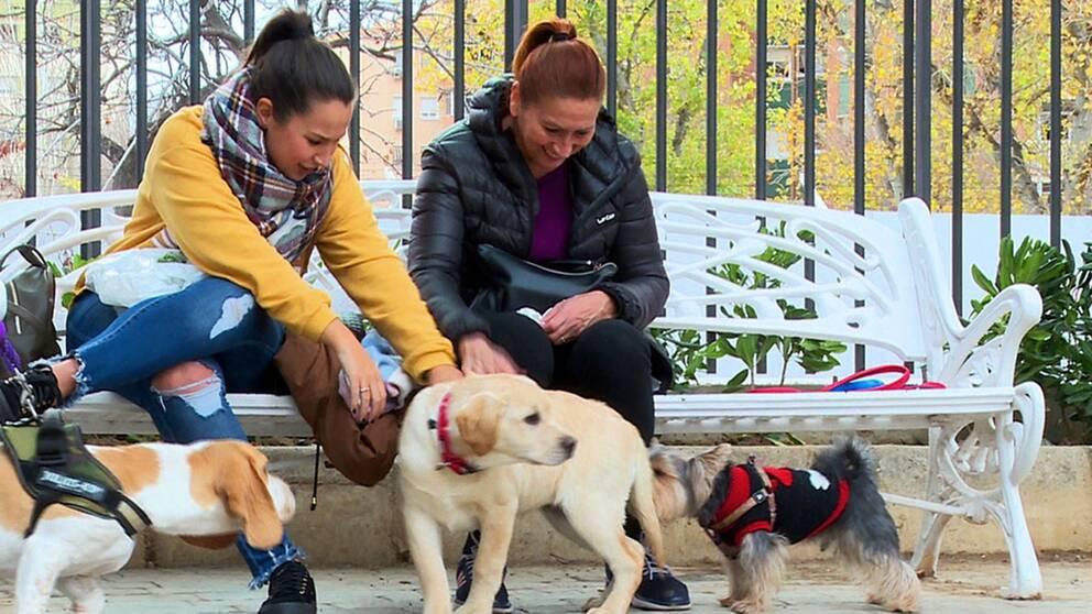 Alla hundägare i Malaga måste nu DNA-testa sina hundar. Staden vill ha koll på herrelösa hundar och få bort hundbajset från gatorna.