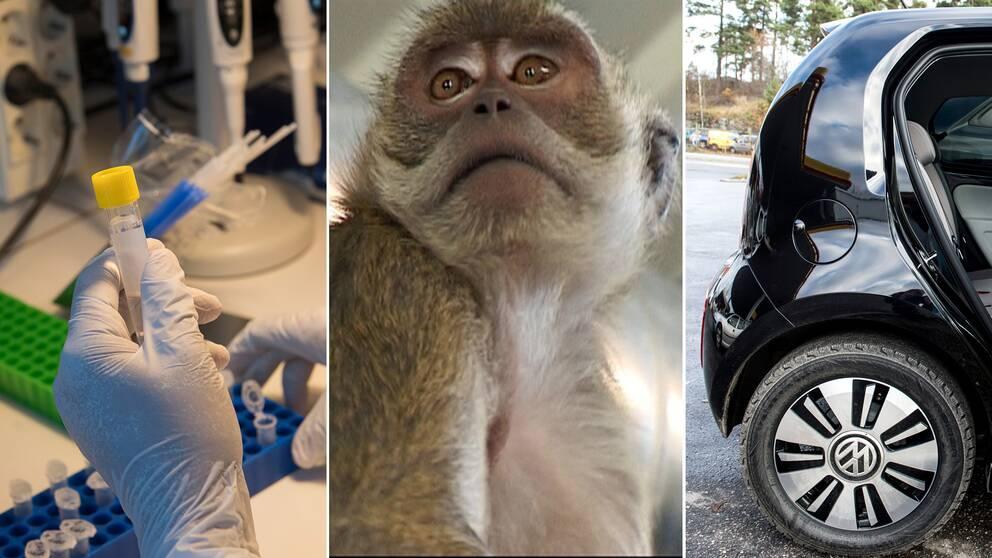 Tresplittsbild på ett labb, en apa och en Volkswagen-bil.