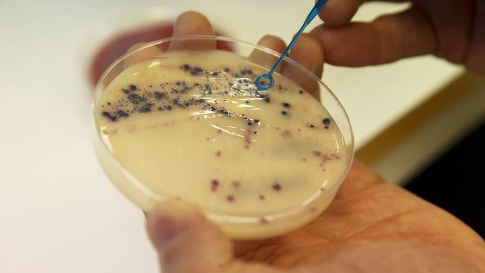 Antibiotikaresistenta bakterier.