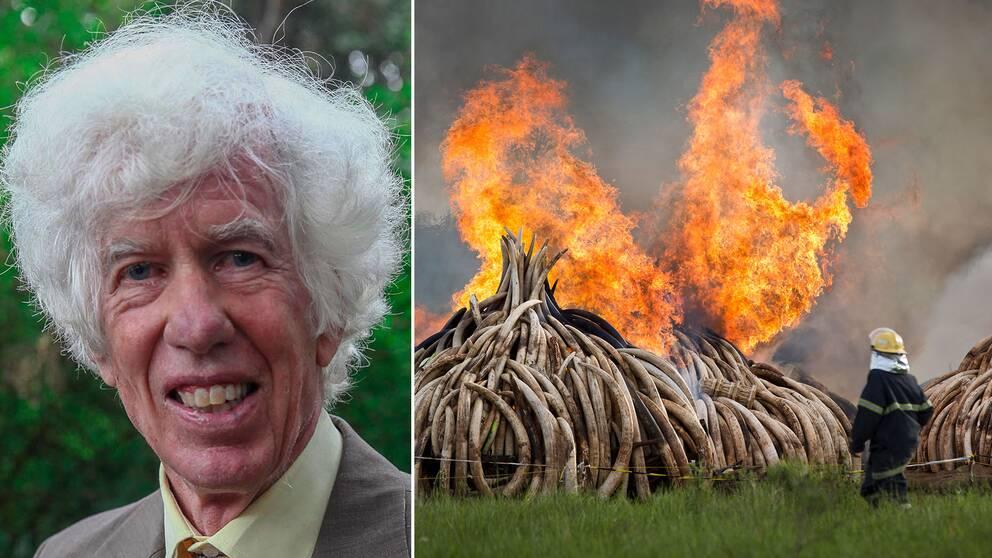Esmond Martin och en man som eldar upp beslagtaget elfenben.