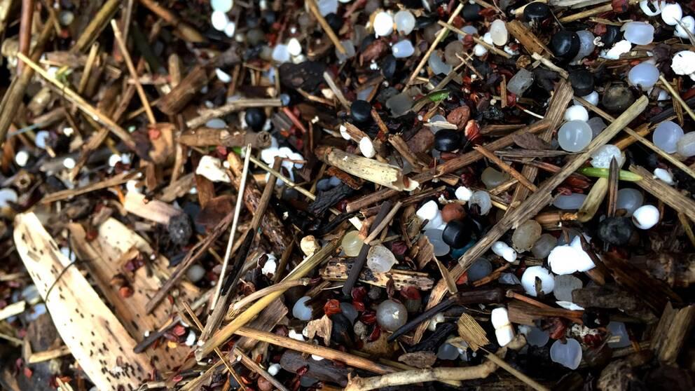 Plast överallt. En vanlig strand i Bohuslän, mikroplasterna syns tydligt.