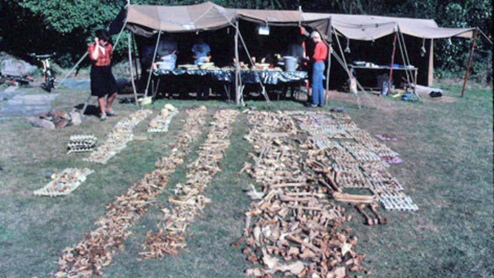 Forskare studerar skelettdelar