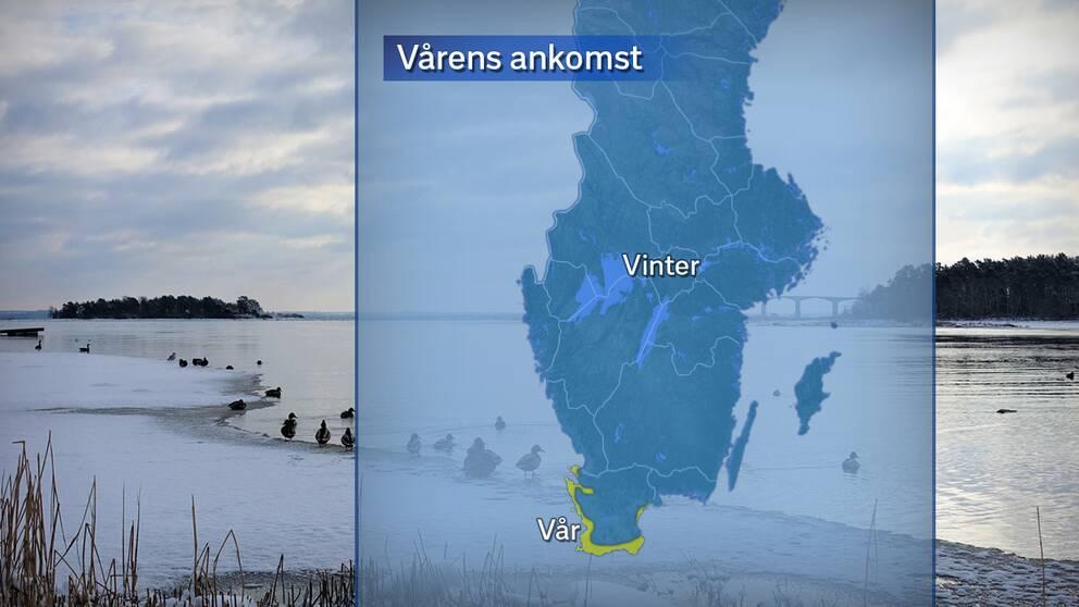 Den meteorologiska våren kom till Skåne den 15 februari.