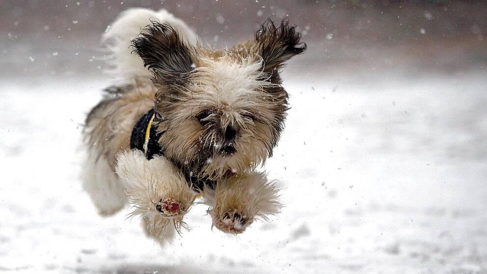 Genrebild på hund i snö.