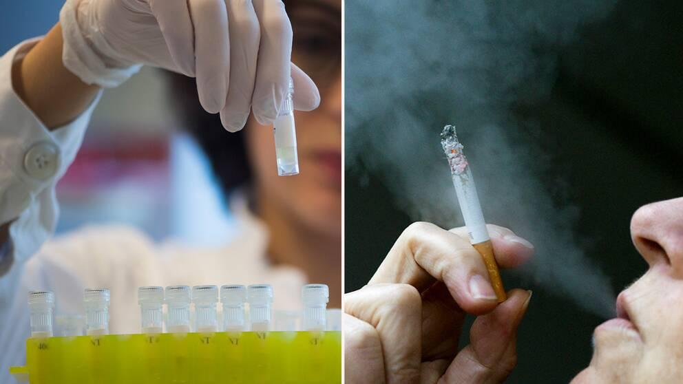 En ny studie visar bland annat annat att rökare har fler regulatoriska T-celler vilket försämrar immunförsvaret.