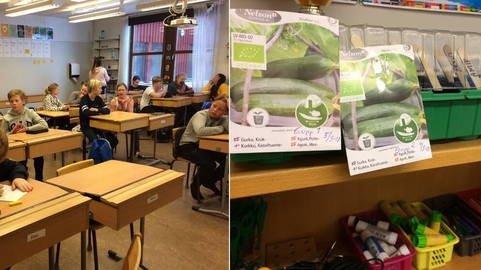 Klass 5A på Bråtenskolan i Karlskoga och en bild på fröpåsar i ett montage.