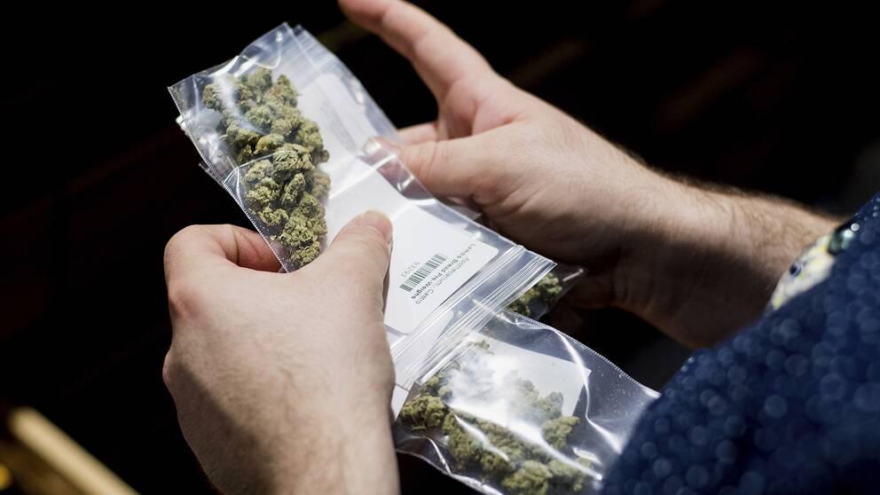 Cannabis packat i små plastförpackningar.