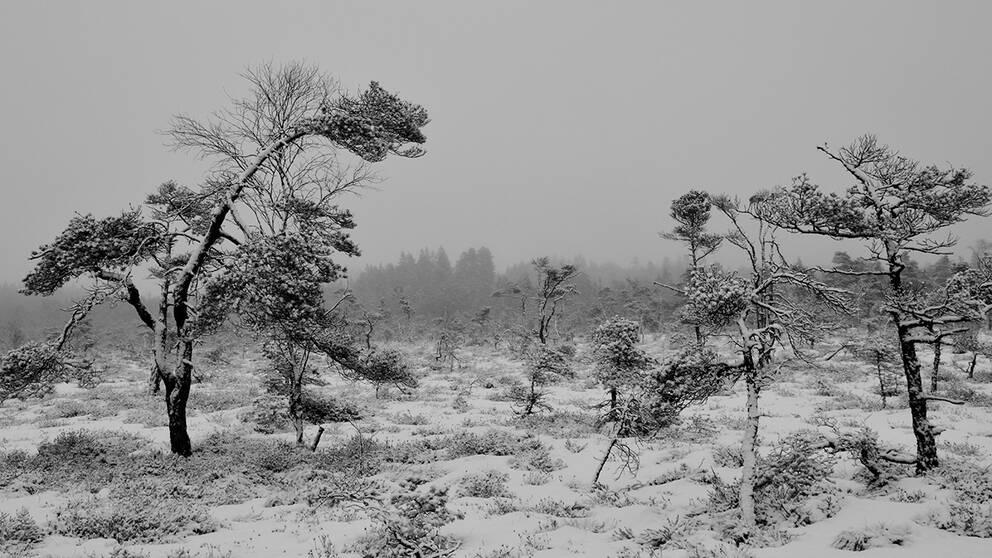 Så här ser det svartvita vardagsvädret ut här i Öxabäck, Västergötland.