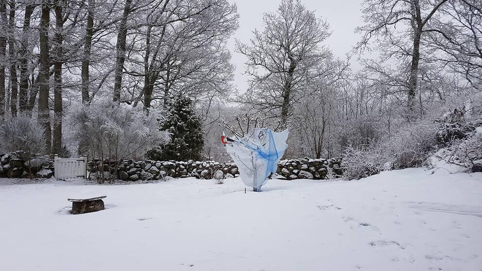 Nu får det vara nog. Med snö pch disväder ! Östra Starrkärr, Stenungsund Kommun.