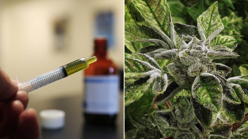 CBD-oljan är till skillnad från den rusgivande och mer kända THC, inte psykoaktivt och orsakar i sig inget rus.