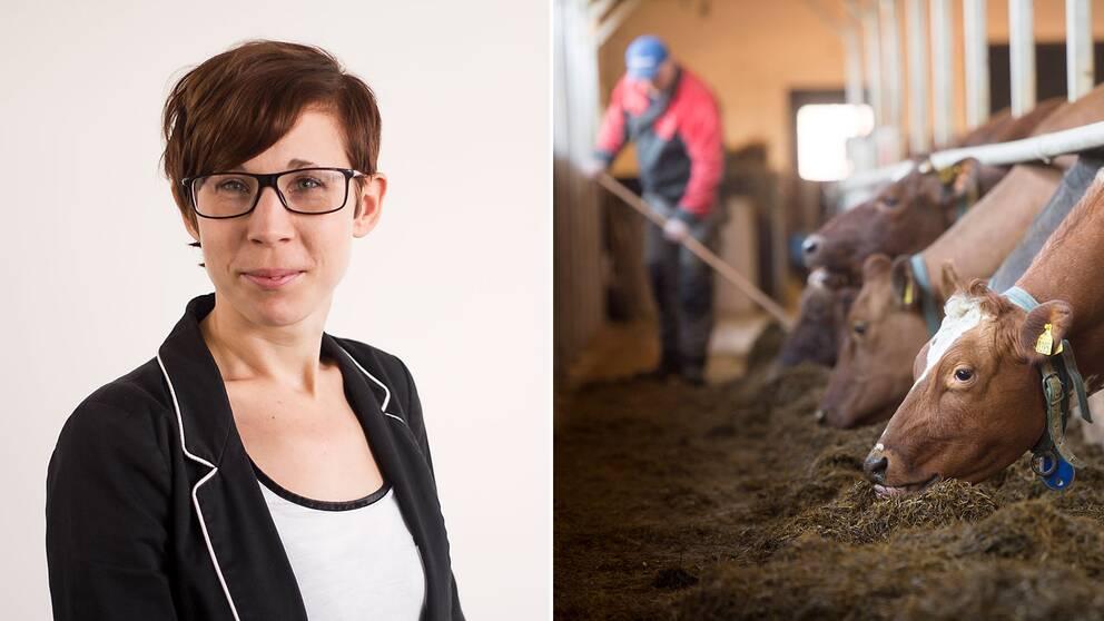 Moa Richter Hagert, kommunikationsansvarig på Djurens rätt, och en arkivbild föreställande en bonde med mjölkkor.