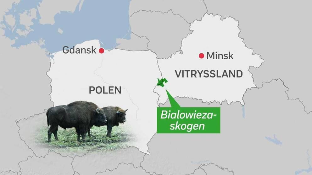 Skogsområdet som tvisten gäller ligger på gränsen mellan Polen och Vitryssland.