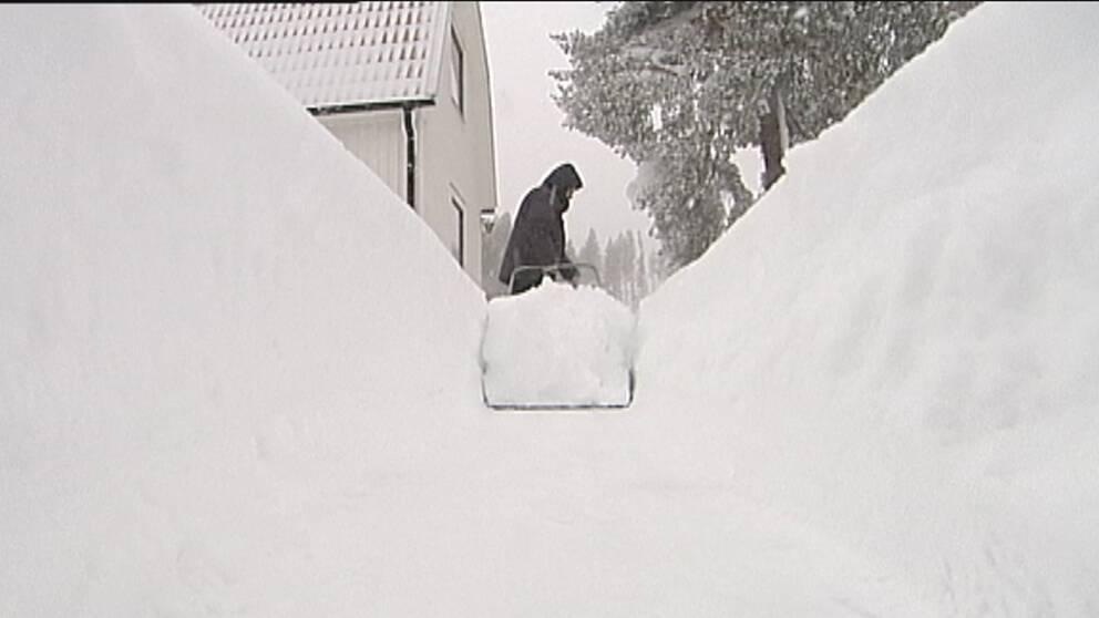 Snökanonen från Skellefteåbukten gav lokalt mycket snö, som här i Bureå den 11 januari.