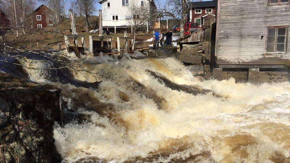 Vattennivåerna är höga i små och medelstora vattendrag i hela Västernorrland.