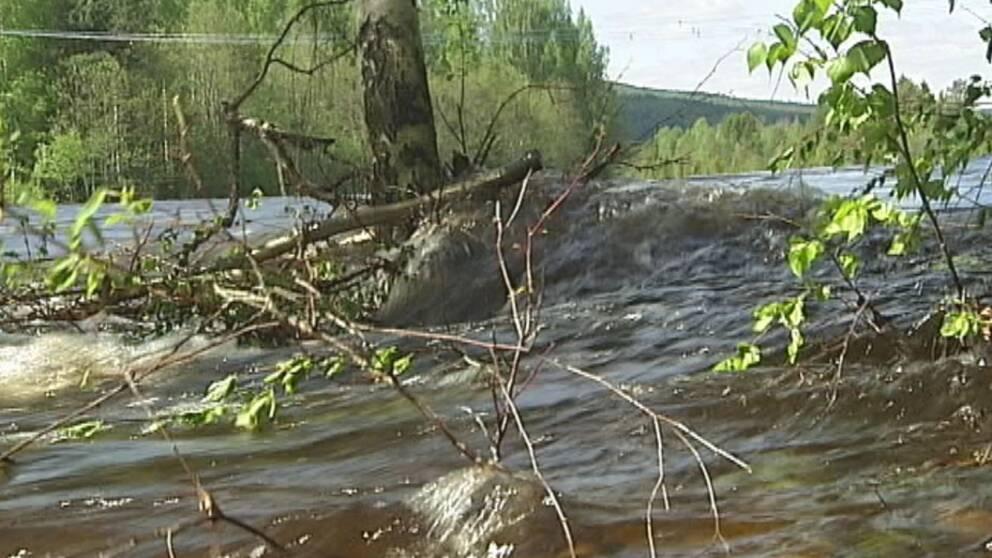 Vårfloden väntas nästan normal | SVT Nyheter