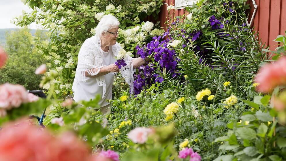Pensionär som kollar på blommor