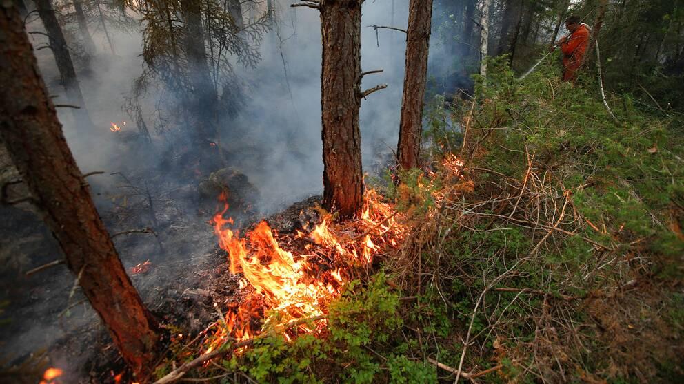 Just nu är det stor risk för skogsbrand i Stockholms län.
