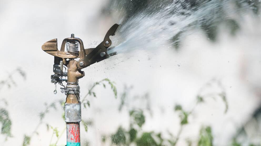 Vattenspridare som vattnar.