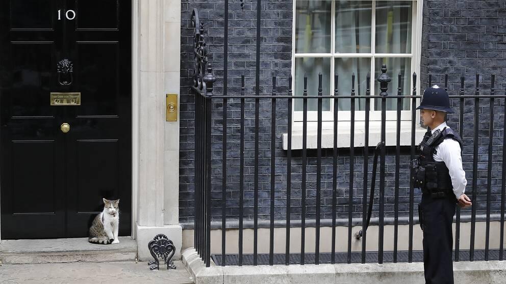 En katt och en brittisk polis utanför premiärministerns hem på 10 Downing Street i London.