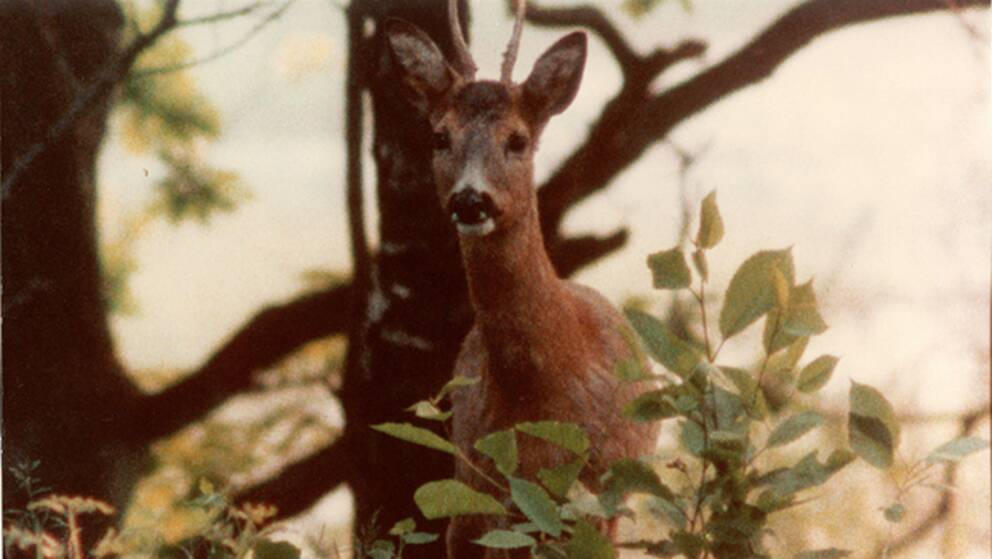 """Stillbild ur filmen """"Naturens hämnd"""", som filmades av Per Källberg."""