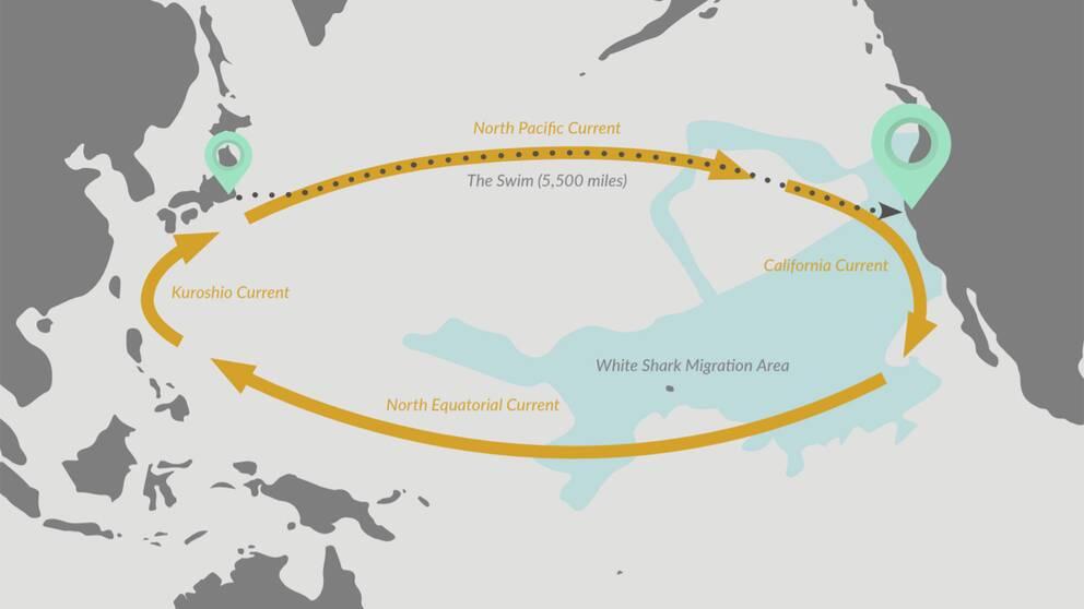 En karta över den väg Ben Lecomte ska simma.
