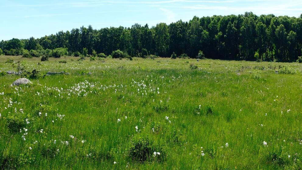 Naturreservatet Mosslunda