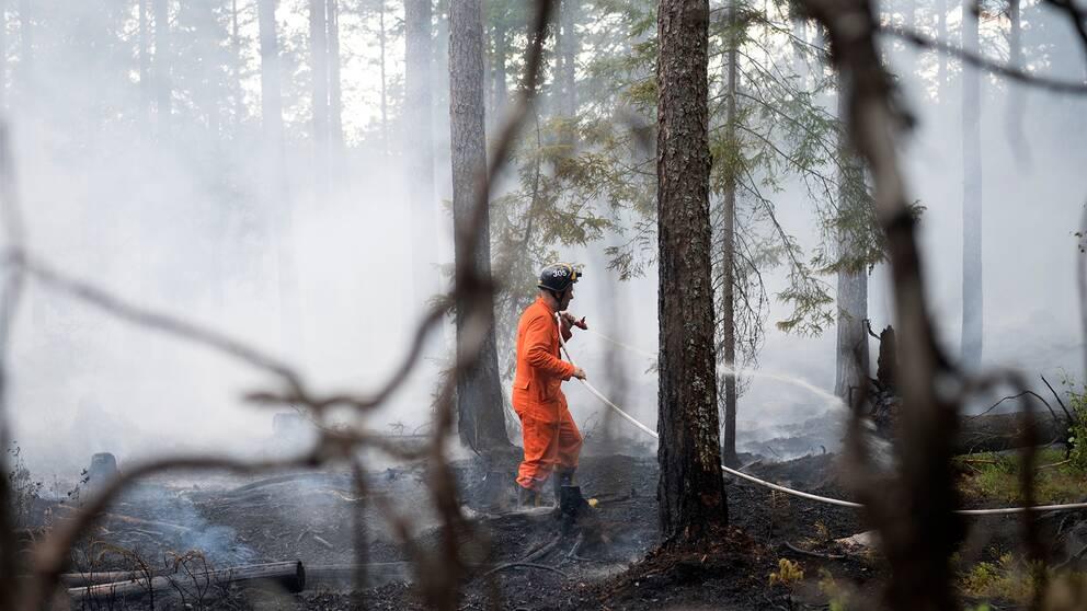 Brandman bekämpar skogsbranden i Sala i Västmanland.
