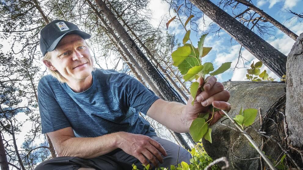 Andreas Wedman, naturvårdsbiolog på Länsstyrelsen Gävleborg.