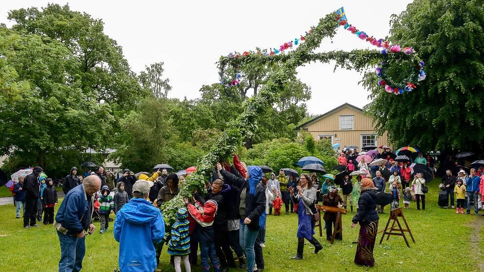 Människor i regnkläder reser en midsommarstång.