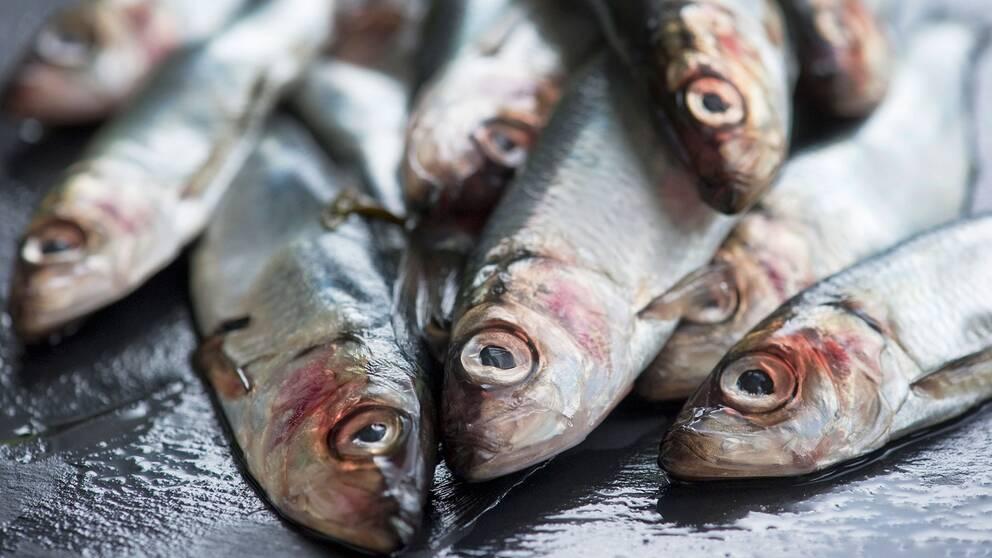 Snart har halva Östersjön strömming med dioxinvärden under EU:s gränsvärde.