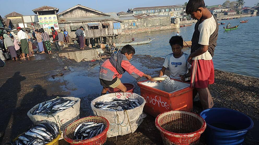 Unga män vid Sittwe-marknaden i Rakhine, Burma. Här lever många från den utsatta folkgruppen rohingya.