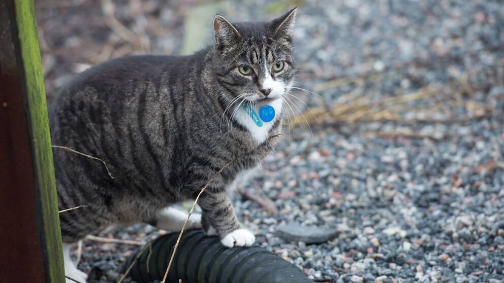 Bilden är en genrebild. Katten på bilden har inget med händelsen att göra.