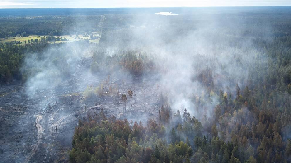 Bild på en skog i Oskarshamn där delar har brunnit ner