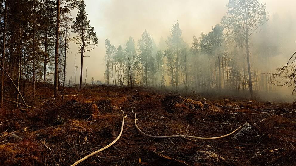 tjock brandrök från marken i skogen, brandslangar på hygge