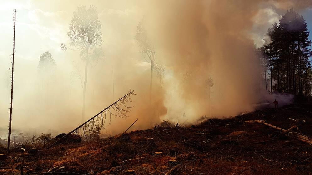 tjock brandrök från marken i skogen