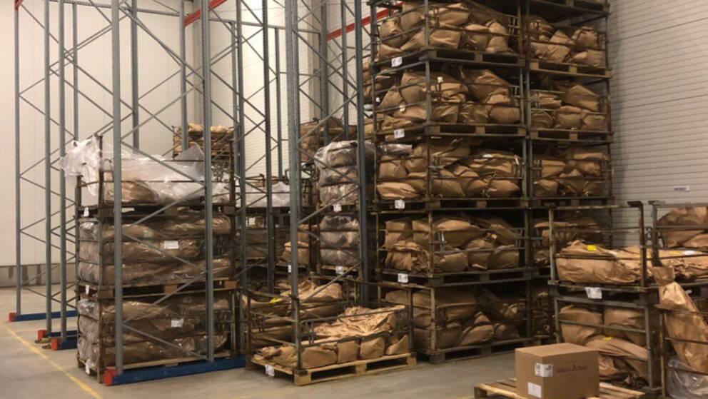 I ett lager i Kumla finns tusentals skogsplantor som inte kan planteras ut på grund av torkan. Plantorna fraktas bort och kastas.