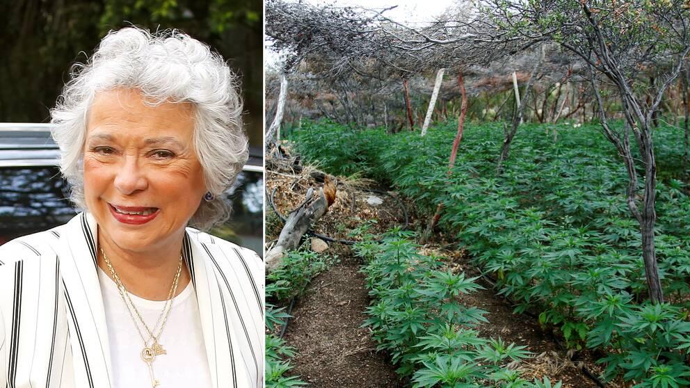 Mexikos kommande inrikesminister Olga Sánchez Cordero och en mexikansk marijuanaodling.