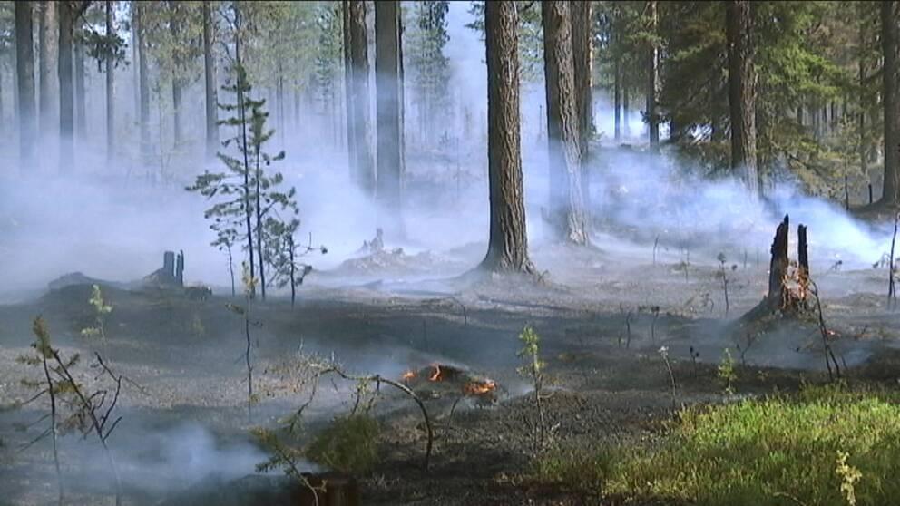 Skogsbrand, eld på marken och rök i luften