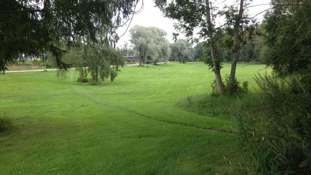 Grön gräsmatta med träd.