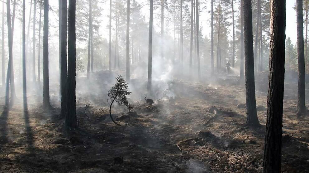 Bild från en av sommarens skogsbränder i Småland.